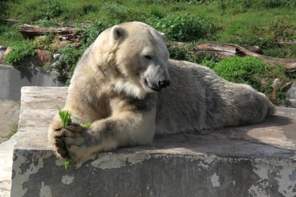 Zoo9b.jpg