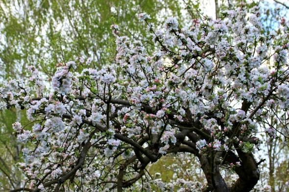 Blossom3