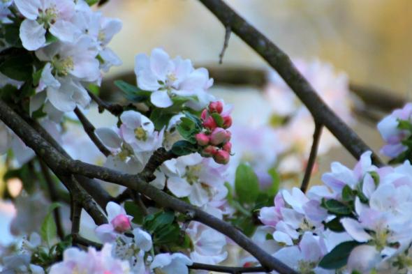 Blossom8