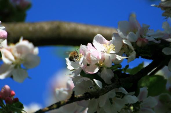 Blossom9b