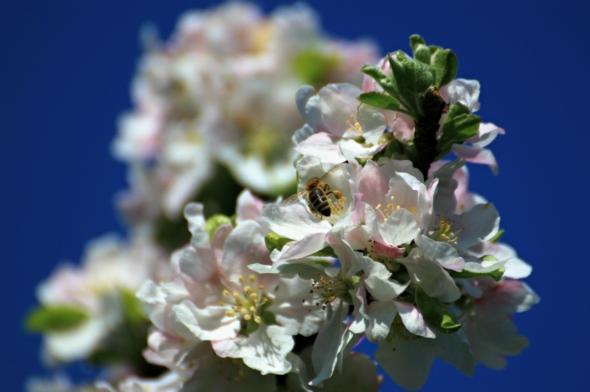 Blossom9d