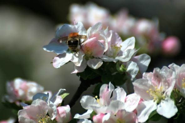 Blossom9e