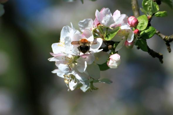 Blossom9f