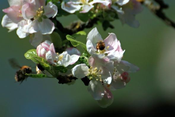 Blossom9g