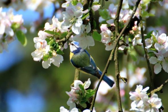 Blossom9k