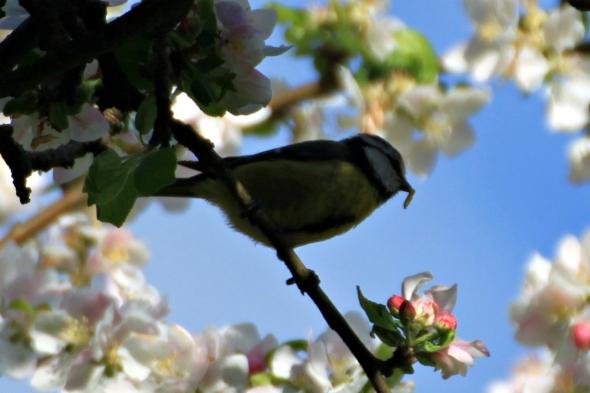 Blossom9m